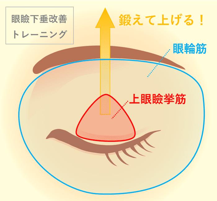 眼瞼下垂改善トレーニング