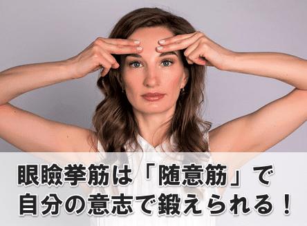 眼瞼挙筋 鍛えられる
